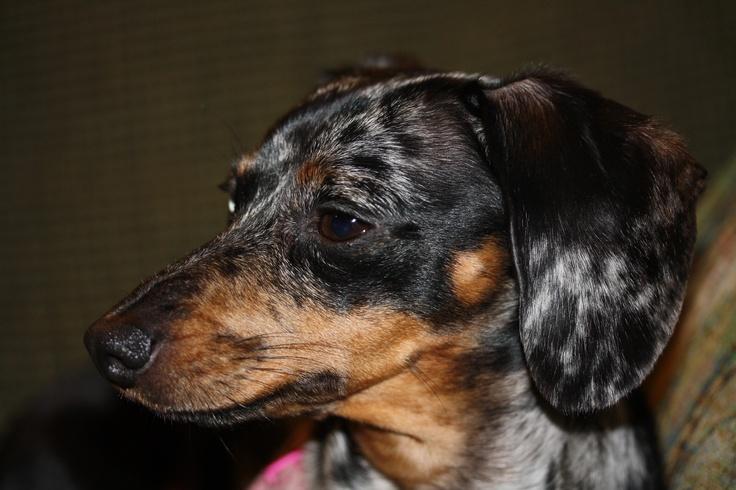My best dog
