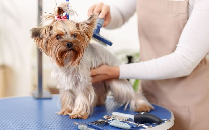 4 Simple Tips For Dog Grooming At Home Dog Grooming Pet