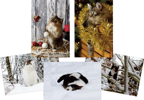 Worldwide Giveaway: Cat Christmas Cards & International Cat Care Conference find this amazing photo from Katzenworld  http://katzenworld.co.uk/2015/11/03/worldwide-giveaway-cat-christmas-cards-international-cat-care-conference/
