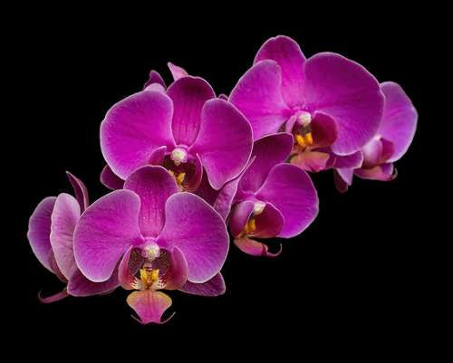 Watering orchids with ice cubes is a really dumb idea. find out how to water orchids properly so that they flower all year long, and never die.