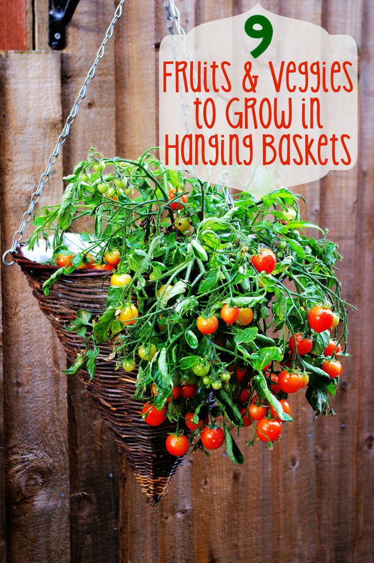 9 Fruits and Veggies to Grow in Hanging Baskets - Learn how to plant a garden when you don't have a garden plot! (http://mothers-home.com/9-fruits-and-veggies-to-grow-in-hanging-baskets/)