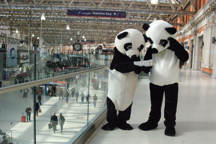 Perplexed Pandas at Waterloo!