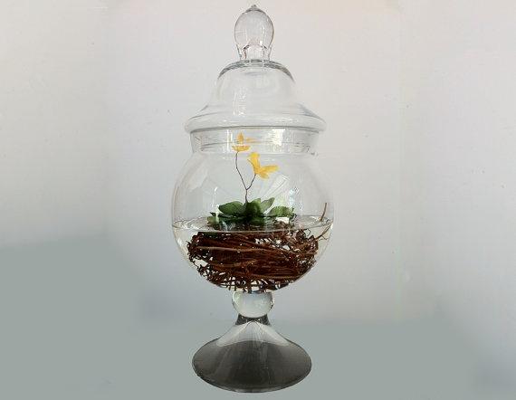 Aquatic carnivorous apothecary jar terrarium. Cool carnivorous terrarium, can add fish!