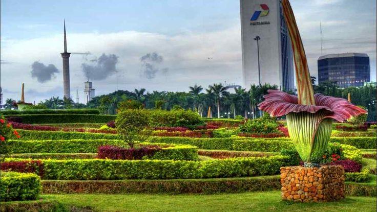 Tukang Taman Jakarta Tips Mudah Merawat Taman