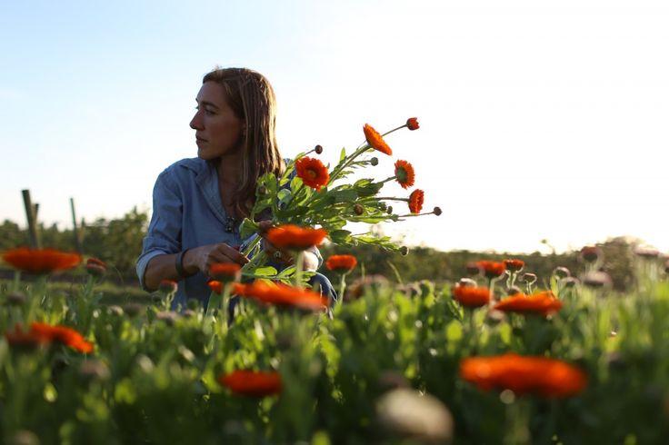 Harvest time at Floret Flower Farm. #farmerflorist