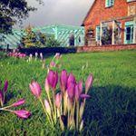 Herbstgre aus Nordfriesland hofhilligenbohl nordseeliebe ferienimreetdachhaus ferieninnordfriesland herbstzeitlose