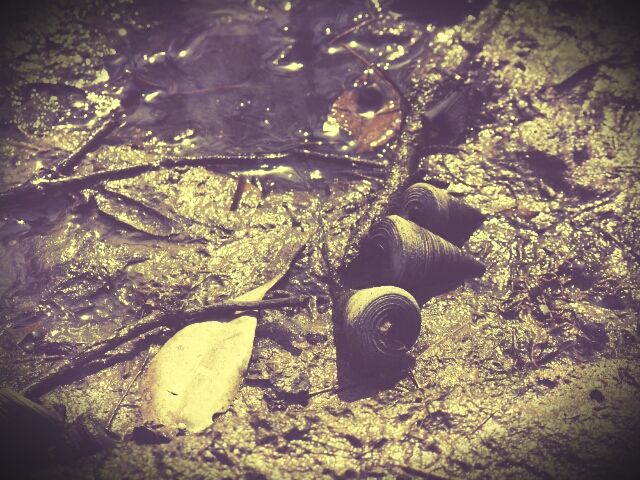 creatures in the mud