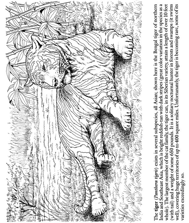 Colouring Pages For Adults Nz : Besten coloring pages animals bilder auf pinterest