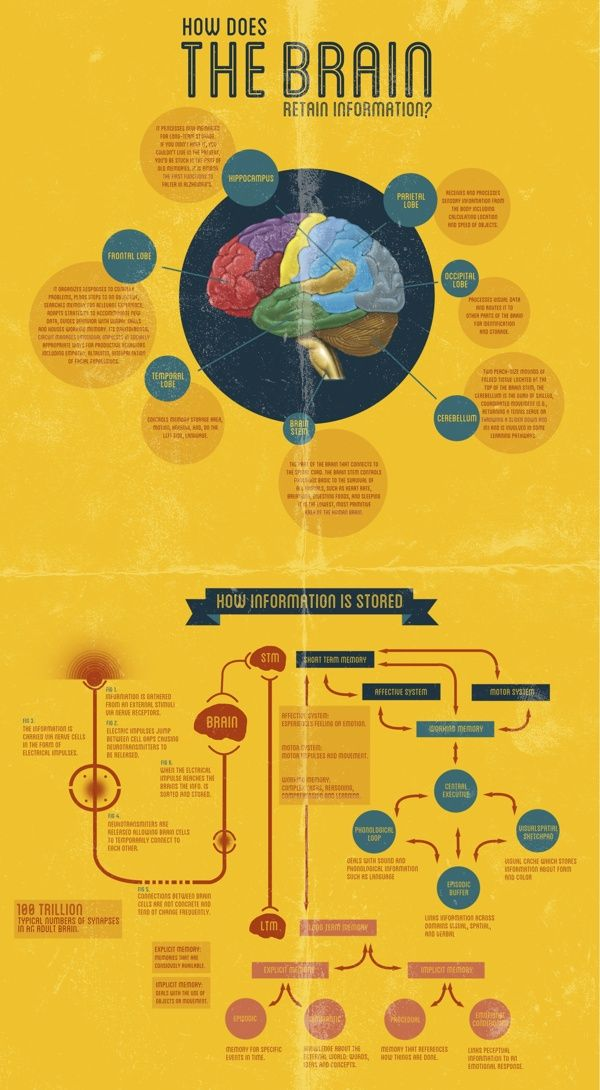 How does the brain retain Information?     Visit our new infographic gallery at http://visualoop.com/