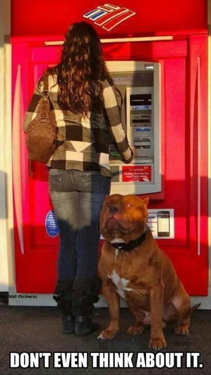 Dont even think about it !!! Lady takes a dog to ATM.