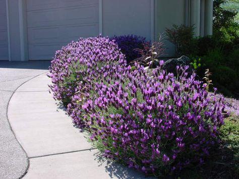 Te muestro los diferentes tipos de plantas y flores que son sencillas de cultivar en jardines y que contribuyen de forma elegante a la decoración exterior. #jardinesyflores