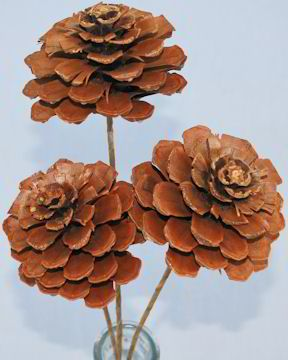 pine cone flowers - Google Search