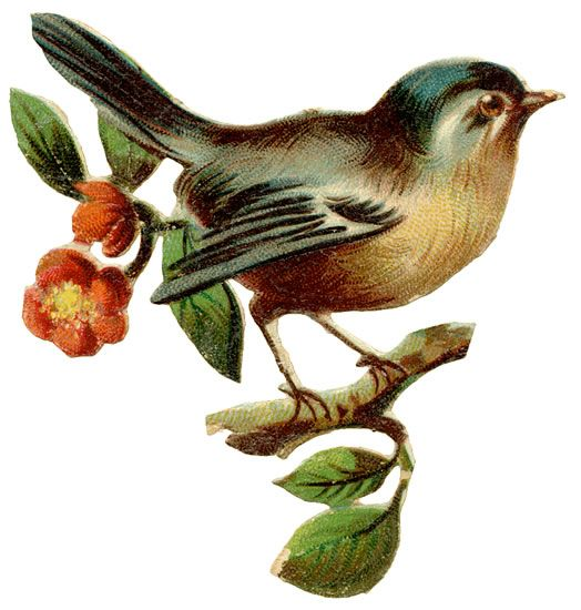 free clipart of vintage birds - photo #48