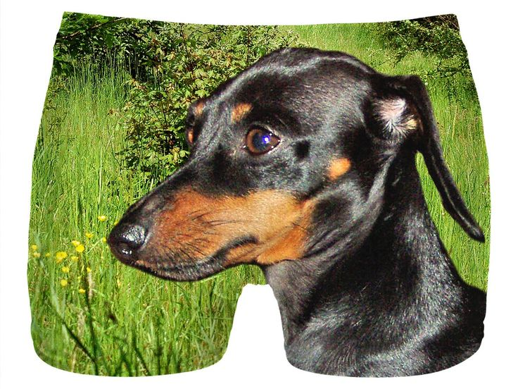 Check out my new product https://www.rageon.com/products/dachshund-doxie-men-underwear?aff=BWeX on RageOn!