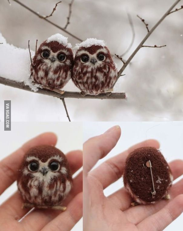 These are NOT two happy owls