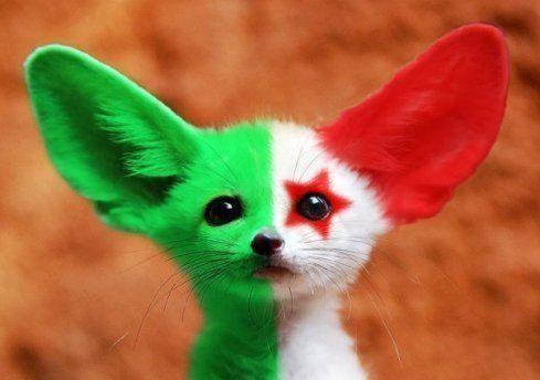 Fennec fox (north African Sahara)