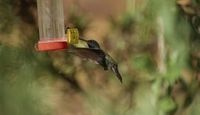 What Is the Sugar-Water Mixture for a Hummingbird Feeder?