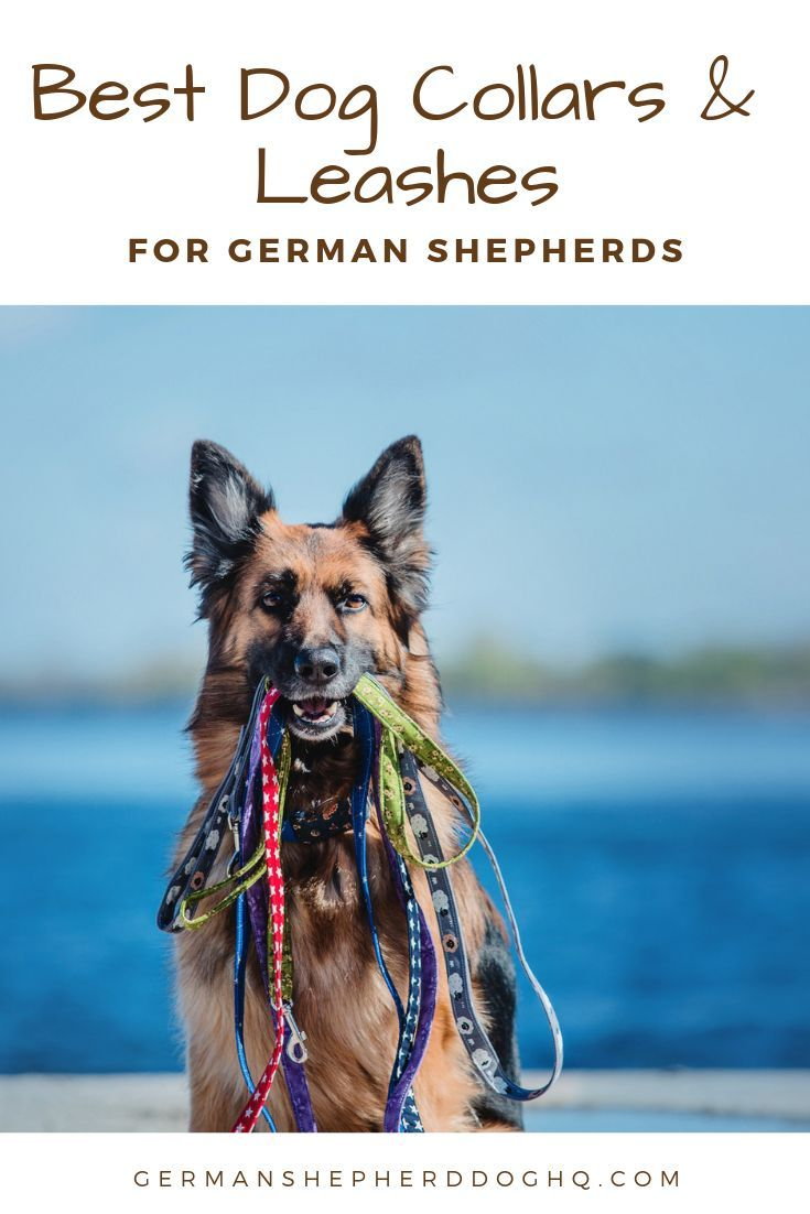 You Know You Need A Collar And Leash For Your German Shepherd