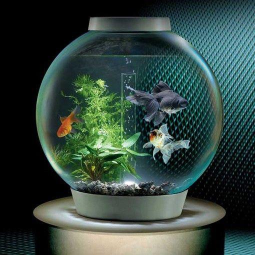 Cool Small Fish Tanks