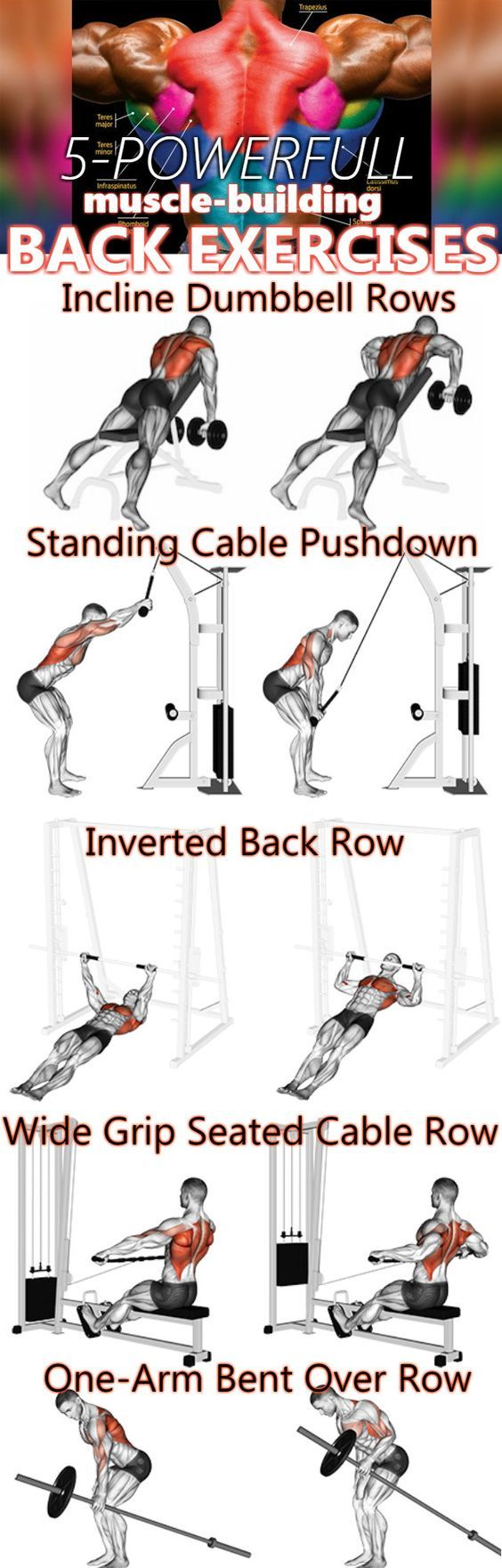 Back Workout Complete With 8 Exercises