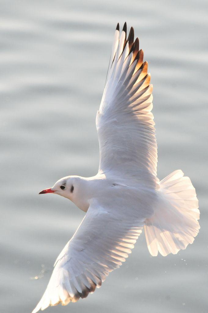 Pin By Nawras On النورس والبحر Birds Flying Pet Birds Beautiful Birds
