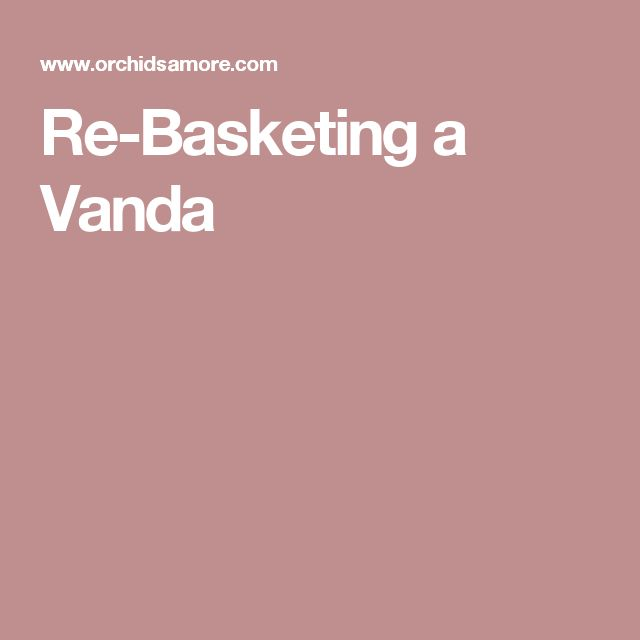 Re-Basketing a Vanda
