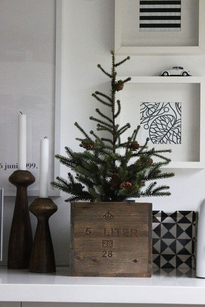 simple evergreen in a wine crate for Christmas