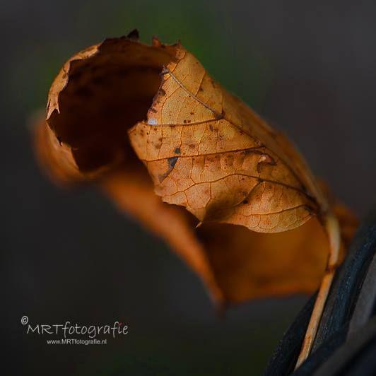 MRTfotografie Workshops en Fotografietips: Tips voor het fotograferen in de herfst