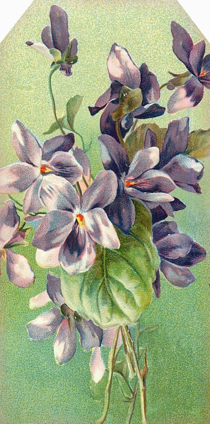PURPLE VIOLETS TAG