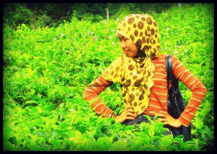 Green day....