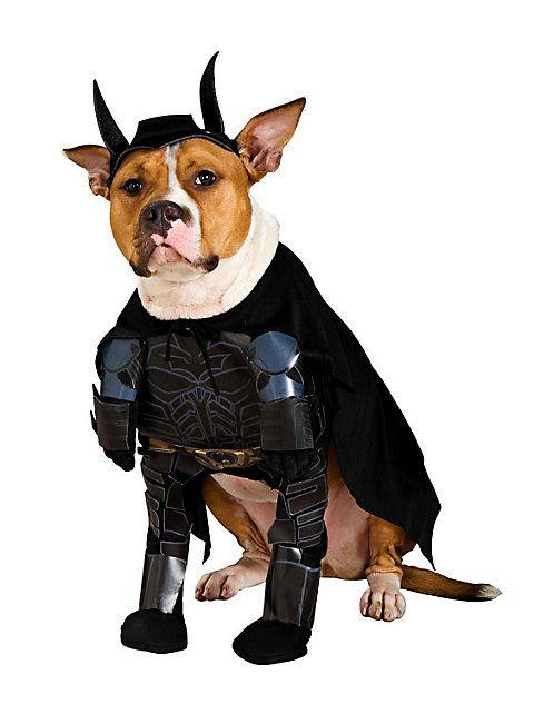 The Dark Knight Rises Batman Hundekostüm Superheld