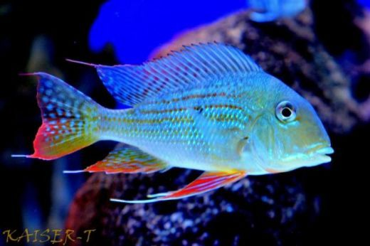 Tropical Fish Species Review