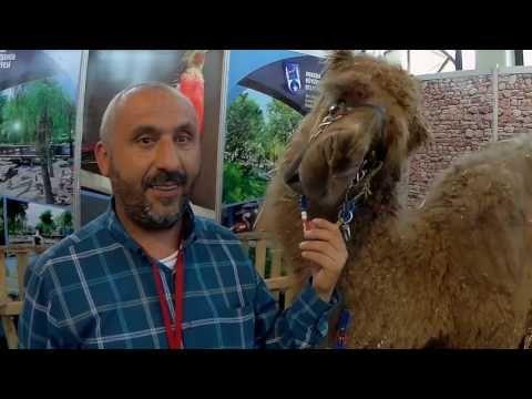 Ankara Evcil Hayvan Fuarı - Çiftlik Hayvanları // Domestic Farm Animals ...