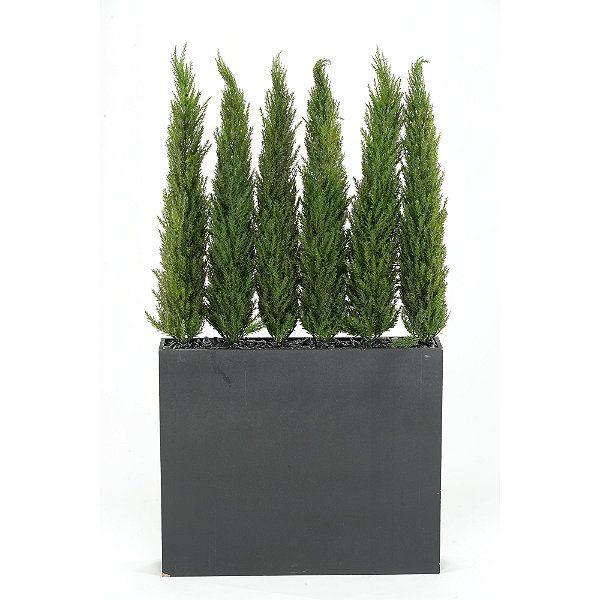 Cedar Screen in Rectangular Planter