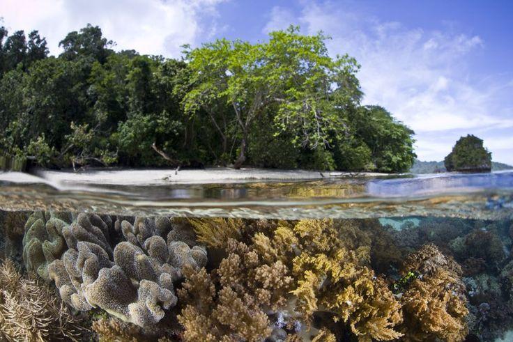 las islas Raja Ampat (Indonesia)
