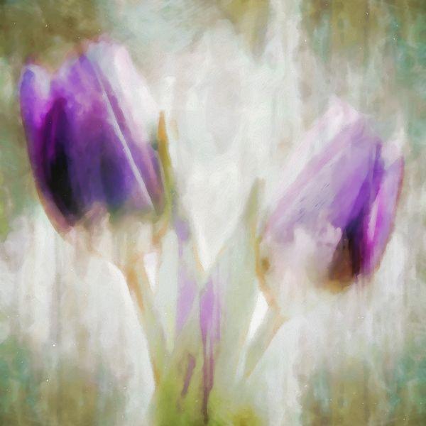 Ethereal Tulips