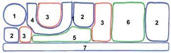 1 - дягиль лекарственный, 2 - душица, 3 - чистец шерстистый, 4 - иссоп, 5 - лук репчатый, 6 - петрушка кудрявая, 7 - чабрец (тимьян ползучий).