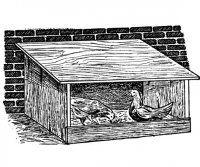 Chov slepic v domácnosti a domácí vejce  - bejvávalo - Šťastný domov 1916