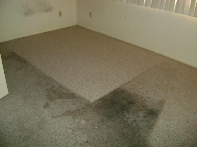 Dirty Filthy Disgusting Gross Carpet Bedroom Stained