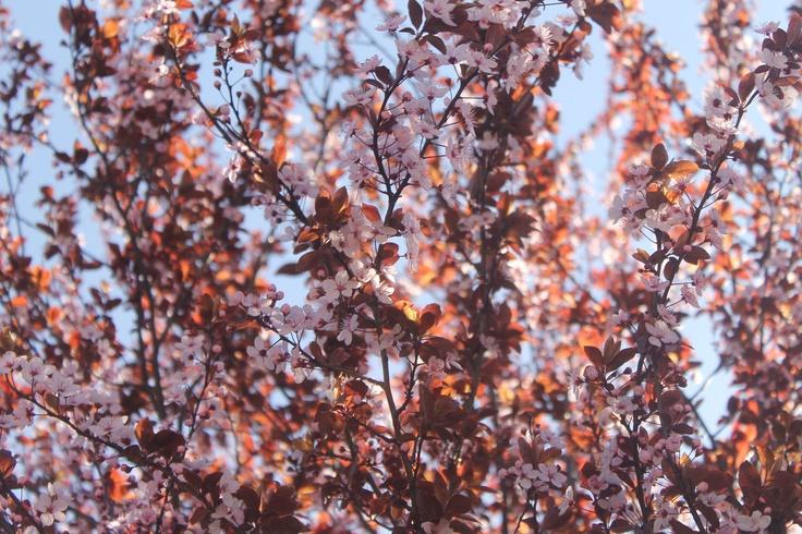 color, sol....vida.