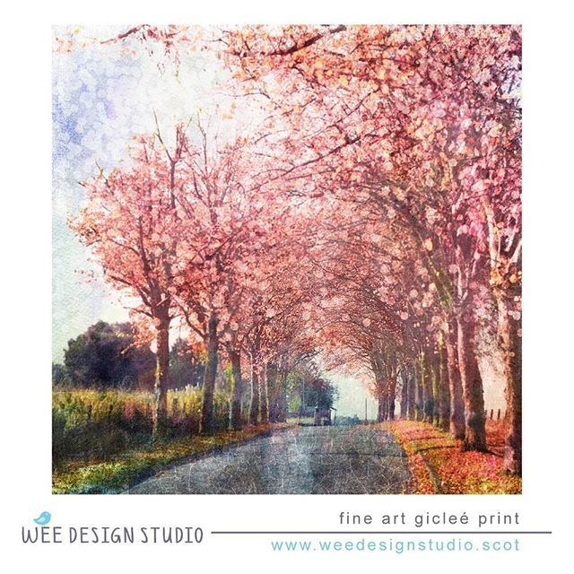 #avenue #spring #glasgow #fineartphotography #digitalcollage