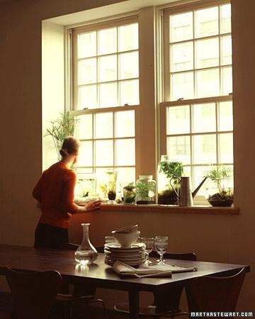Indoor Water Garden - Martha Stewart