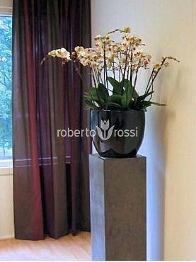Natural orchids in pots plastic round Callisto