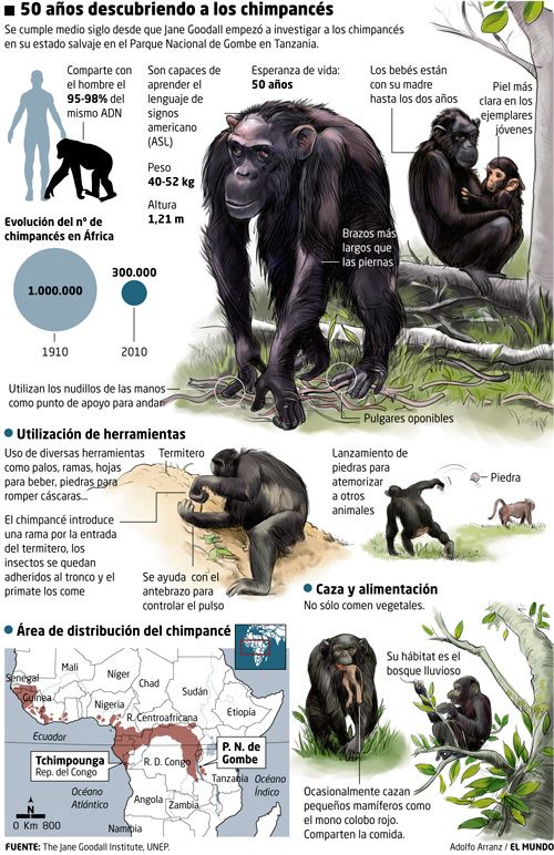 20100716chimpances