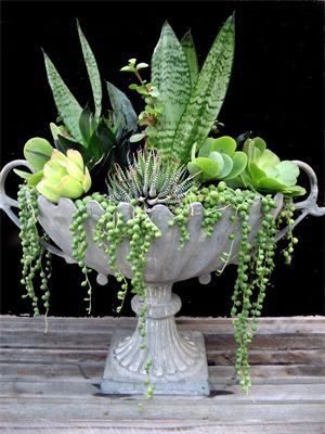 Table design ideas 3 - Succulent Bowls - a planted design - lovely to keep afterwards - would suit the succulent bouquet idea or a green and white themed bouquet - £60.00