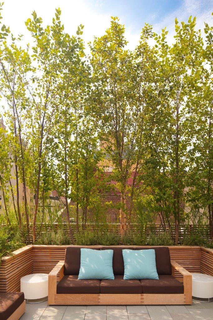 Poplar trees screen - love it!