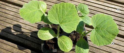 17 beste idee n over eetbare tuin op pinterest samen for Tuinontwerp eetbare tuin
