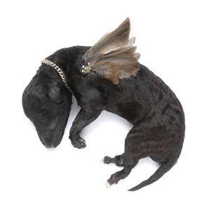 Julia deVille, Stillborn Angel, stillborn puppy,  sparrow wings and sterling silver, 2009.