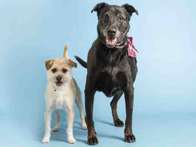 Adopt A Dog Puppy Adoptions Arizona Humane Society Puppy