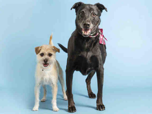 Adopt A Dog Puppy Adoptions Arizona Humane Society Puppy
